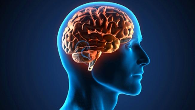 El cerebro reacciona a una lengua escuchada en la infancia y después olvidada