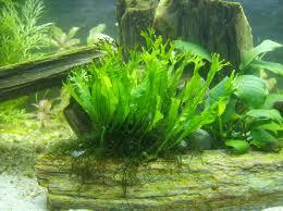 Virus en algas verdes afecta capacidades mentales humanas