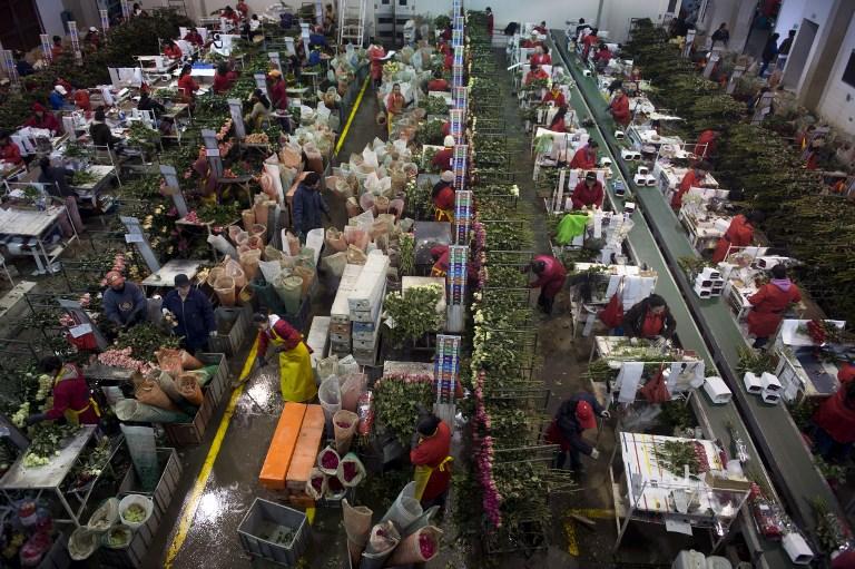 Carrera contrarreloj en Colombia para enviar flores en San Valentín