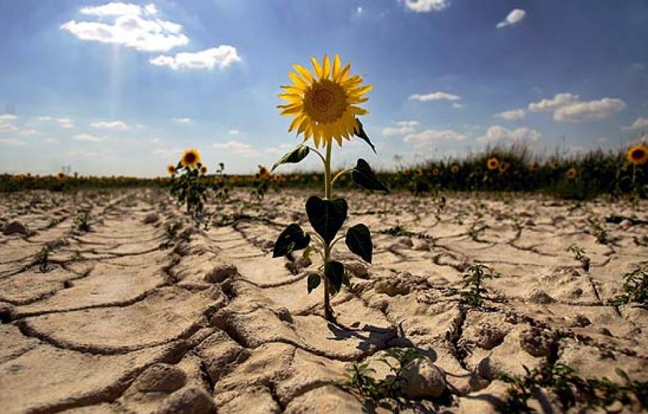 Cambio climático amenaza la seguridad alimentaria mundial, alertan científicos