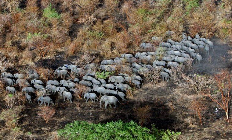 CITES caza animales