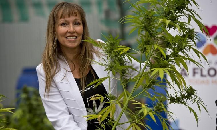 Chile cosecha primera plantación autorizada de marihuana para uso medicinal