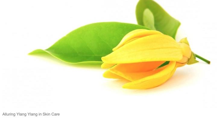 La flor del ylang ylang, oro para las Comoras y reina de los perfumes