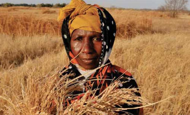 La cifra de víctimas del hambre baja de los 800 millones
