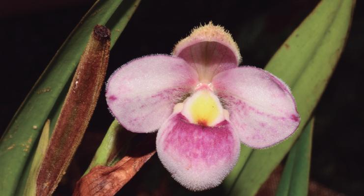 Colombia, país con mayor número de especies de orquídeas en el mundo