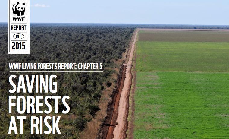 Los 11 lugares más amenazados por la deforestación en el mundo