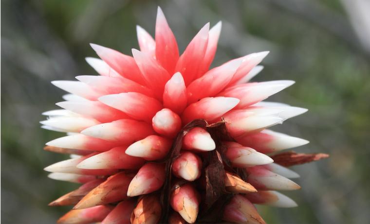 Ciencia y academia juntas en VIII Congreso Colombiano de Botánica