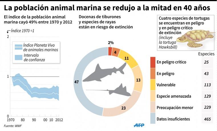 Poblaciones de animales marinos se redujeron a la mitad en 40 años