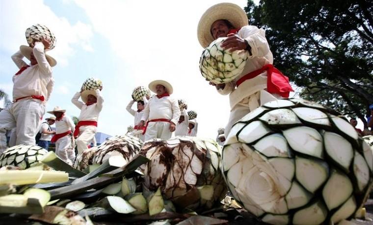 Imponen en Récord Guinness de mayor concentración de jimadores de tequila