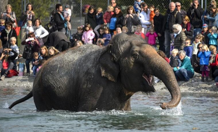 ¿Por qué los elefantes casi no tienen cáncer?