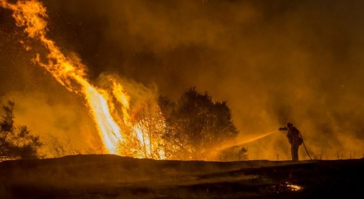 Calentamiento, plagas y árboles muertos: un peligroso cóctel en EEUU