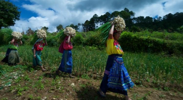 Mujeres rurales: la llave para reconstruir un mundo mejor después de la pandemia