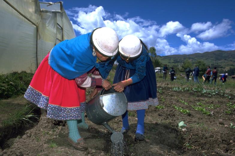 ¿Qué papel tienen las mujeres en el sistema alimentario?