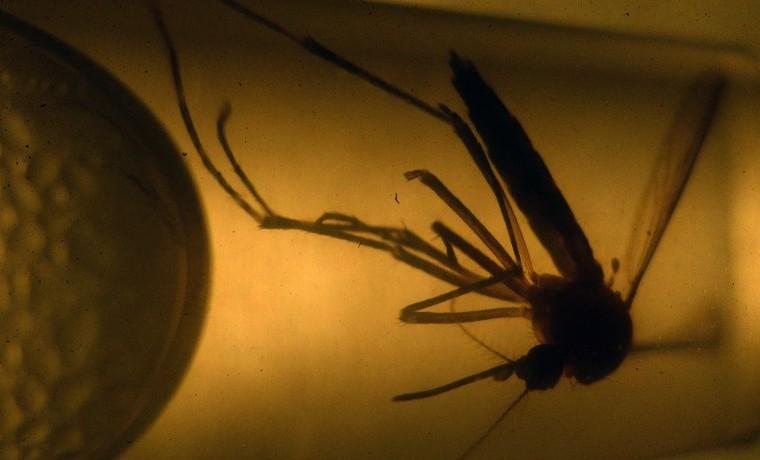 Colombia reporta primeros dos casos de microcefalia asociados al zika