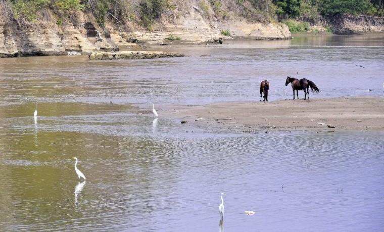 Sequía en Colombia deja pocos peces y mucho lodo en el río Magdalena