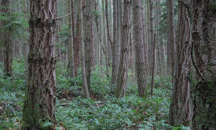 áreas silvestres Bosques ecosistemas terrestres