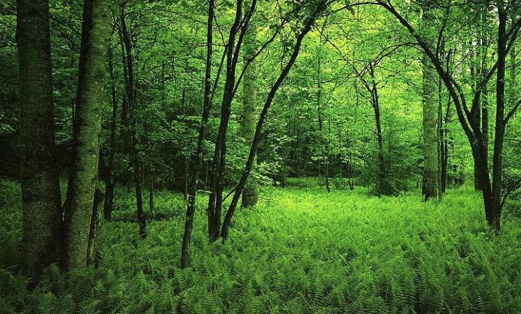 El reto de la aplicación de los enfoques interdisciplinarios y transdisciplinarios en la gestión de los bosques
