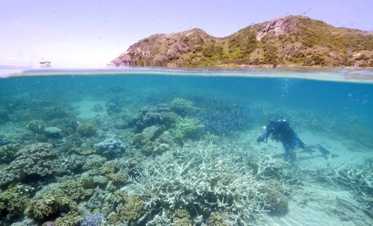 La Gran Barrera de Coral, más amenazada de lo que se pensaba