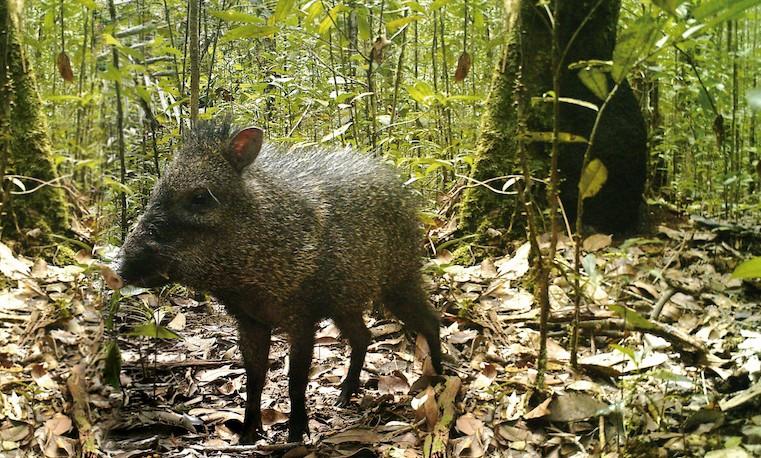 A trabajar por la protección de la vida silvestre