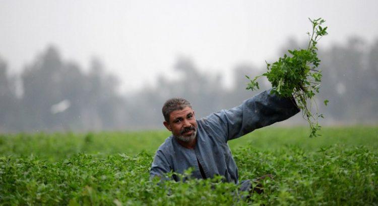 No se pueden seguir ignorando las necesidades de los pequeños agricultores en las negociaciones sobre el cambio climático