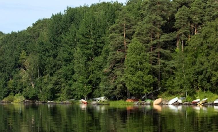 Nuevos aportes al fortalecimiento de capacidades en la gestión forestal