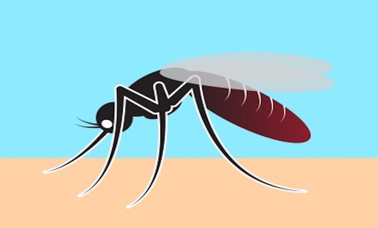 """""""Preocupante incremento"""" de paludismo en región selvática de Colombia"""
