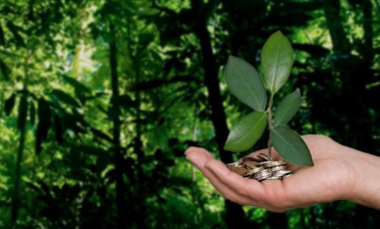Tres ejemplos de cómo aprovechar la sostenibilidad para los negocios