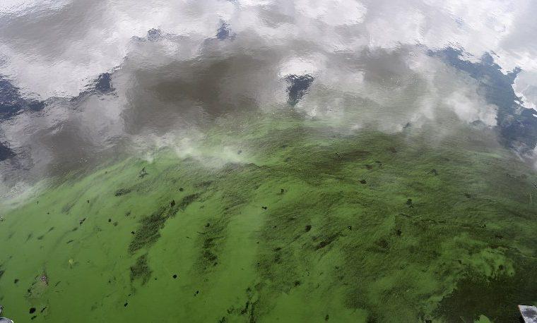 Un alga babosa y maloliente espanta turistas y asfixia la vida marina en Florida