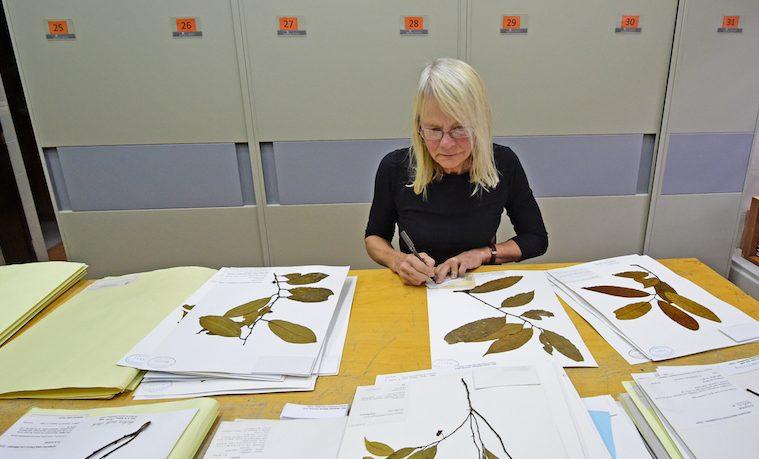 El Instituto SINCHI identifica dos nuevas especies de plantas amazónicas
