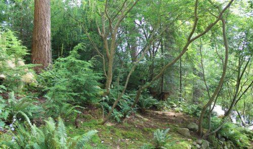 Repensando la conservación de la naturaleza