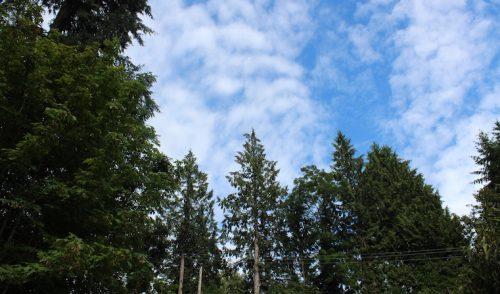 La estética de los bosques