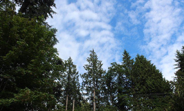 Principios para el desarrollo forestal que queremos