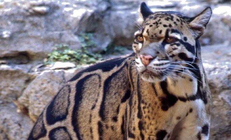 La reducción del número de presas amenaza a los grandes carnívoros