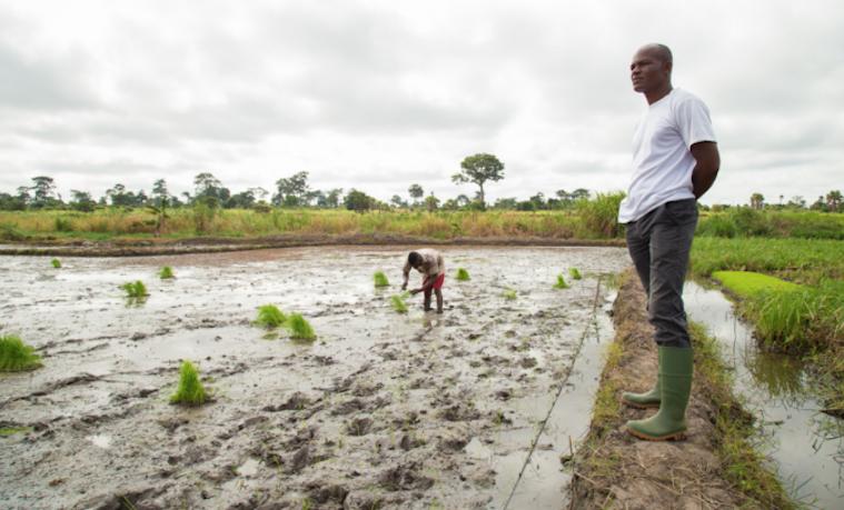 Sistemas agrícolas inteligentes