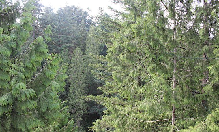 Los bosques desde la perspectiva del pensamiento complejo