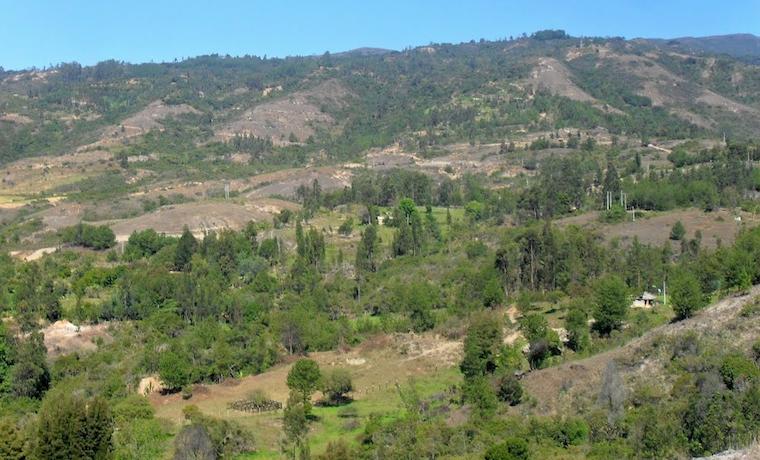 Las fuentes de recursos y nuevas regulaciones para el desarrollo forestal