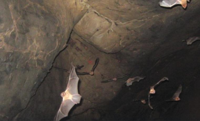 Murciélagos: siempre amenazados, poco comprendidos