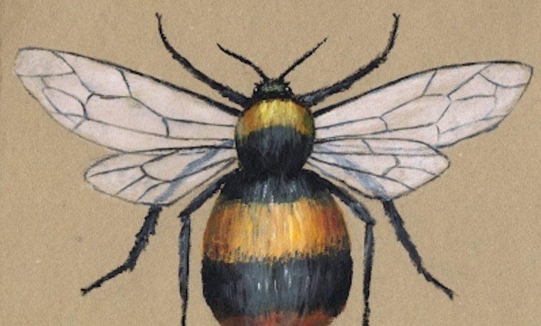 EEUU incluye una abeja en lista de especies en peligro por primera vez