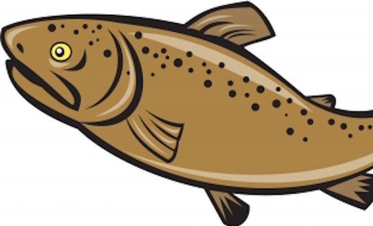 La acuicultura amenaza seguridad alimentaria de los países en desarrollo