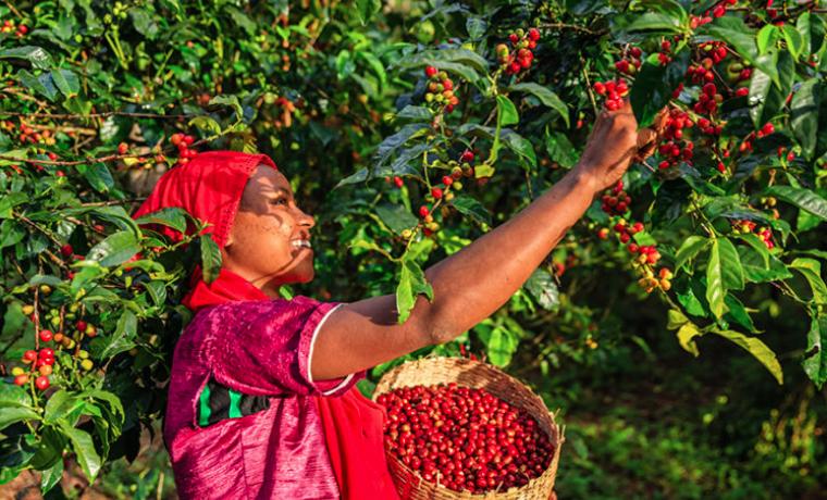 Tres desafíos que enfrentan las mujeres en la agricultura