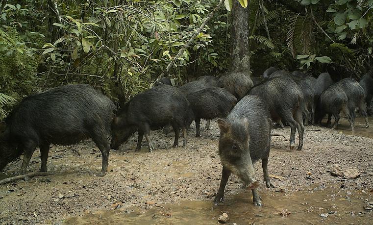 Retos de la paz en la Amazonia: conservar la vida silvestre