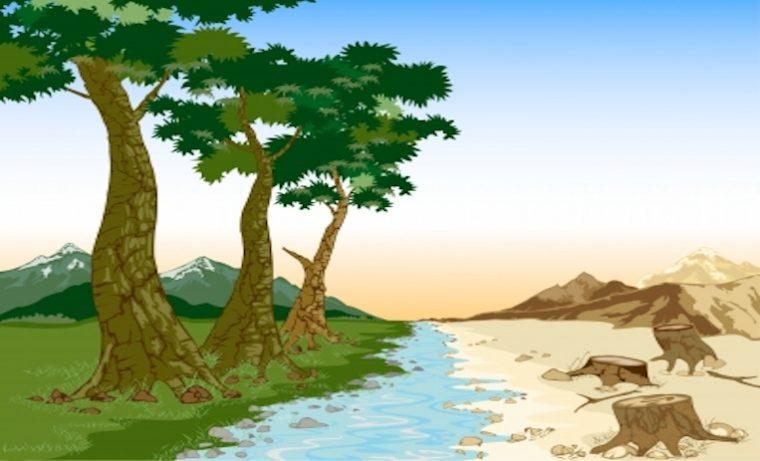 Regalías de Ciencia, Tecnología e Innovación enseñan a cuidar el bosque
