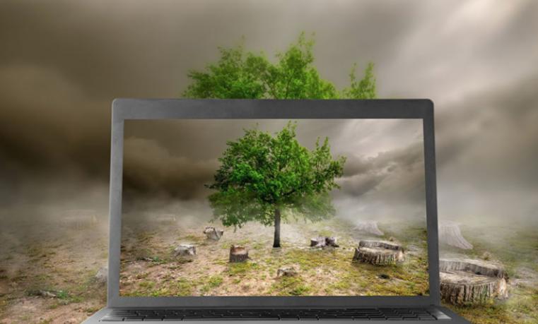 Cómo las fintech pueden ayudar a los bancos a combatir la deforestación