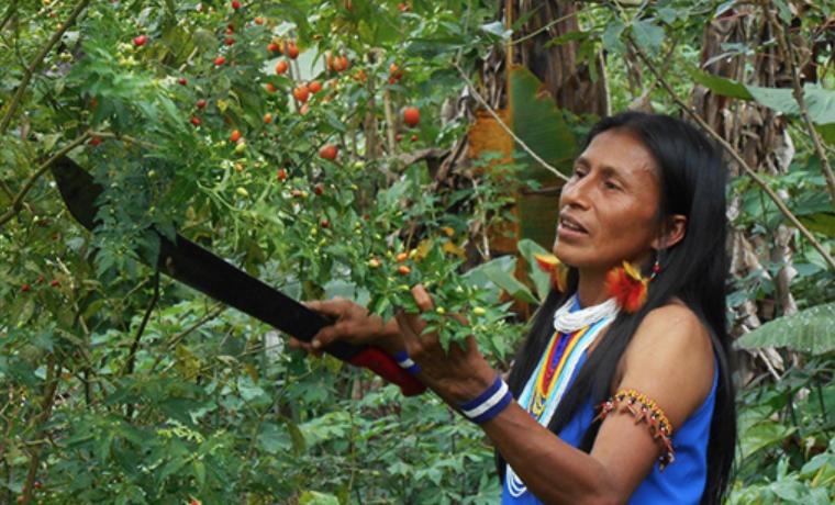6 formas en que los pueblos indígenas ayudan al mundo a lograr el #HambreCero