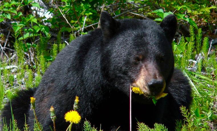 Un oso 'Chucho'