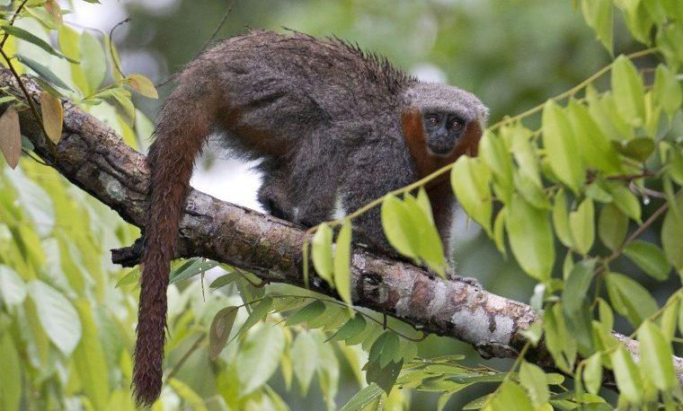 Casi 400 nuevas especies vegetales y animales descubiertas en la Amazonía