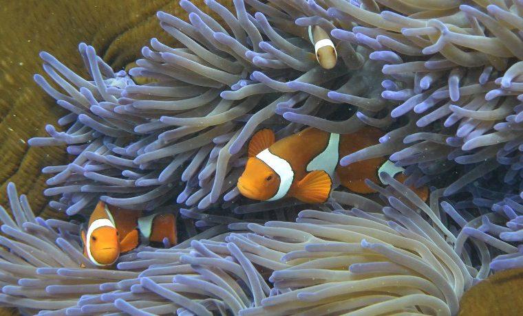 Aclarar las nubes para reparar la Gran Barrera de Coral