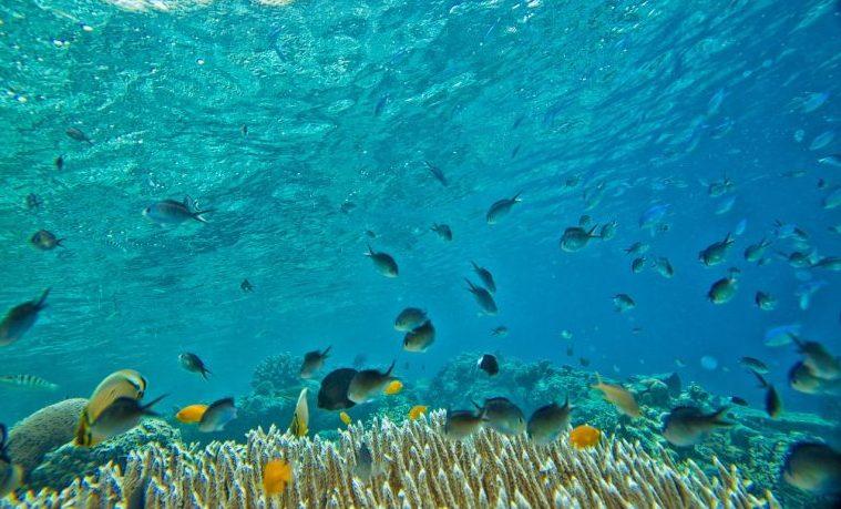 El blanqueamiento de los corales se quintuplicó desde la década de 1980