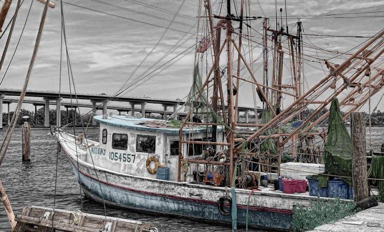 Grandes flotas de pesca explotan el 55% de los océanos