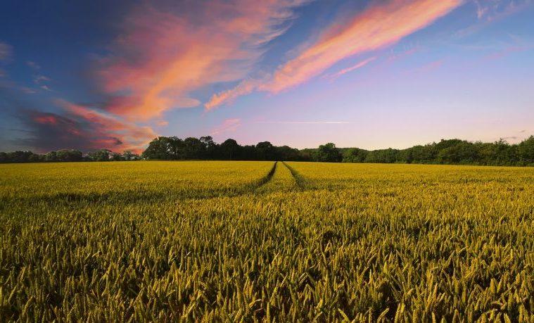 El incentivo de negocios de la resiliencia climática